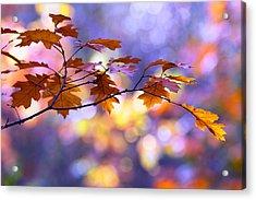 United Colours Of Autumn II Acrylic Print