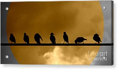 Acrylic Print featuring the photograph Unity Is Strength by France Laliberte