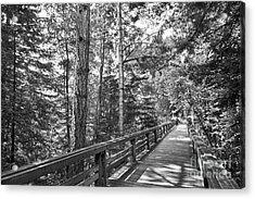 University Of California Santa Cruz Walkway Acrylic Print