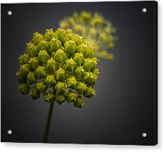 Unknown Wildflower Acrylic Print