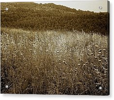 Unless The Grain Of Wheat Falls Into The Ground And Dies Acrylic Print by Sandra Pena de Ortiz