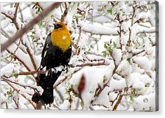 Acrylic Print featuring the photograph Unruffled by Brenda Pressnall