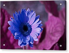 Acrylic Print featuring the photograph Untitled by David Stine