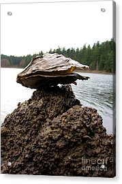 Acrylic Print featuring the photograph Untitled by Devin  Cogger