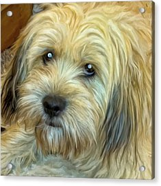 Acrylic Print featuring the painting Chewy by Michael Pickett