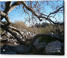 Untitled Photograph 2 Acrylic Print by Drew Shourd