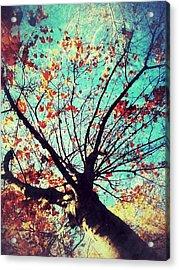 Untitled Tree Web Acrylic Print by Juliann Sweet