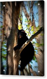 Up A Tree Acrylic Print by Valarie Davis