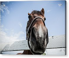 Up Close Acrylic Print by Alexey Stiop