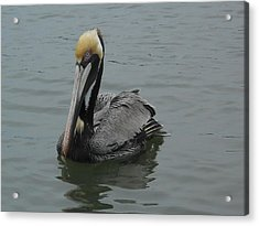 Up Close And Pelican Acrylic Print