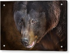 Up Close And Personal Acrylic Print by Barbara Manis