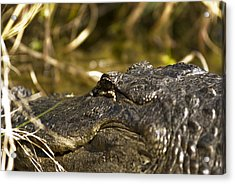 Up Close And Personal Acrylic Print by Frank Feliciano