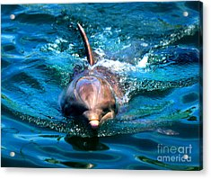 Acrylic Print featuring the photograph Up Close And Personal by Kristine Merc