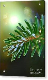 Up Close Evergreen Branch Acrylic Print