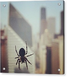 Up Here With The Spiders Acrylic Print