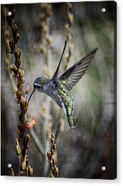 Up In The Air Acrylic Print
