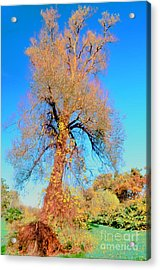 Up Rooted Tree Acrylic Print by Kathleen Struckle