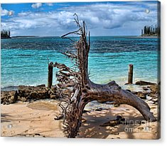 Acrylic Print featuring the photograph Up Rooted by Trena Mara