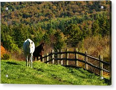 Acrylic Print featuring the photograph Up The Hill by Joan Davis