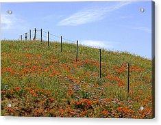 Up The Poppy Hill Acrylic Print