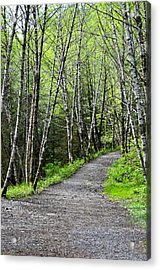 Acrylic Print featuring the photograph Up The Trail by Cathy Mahnke