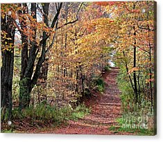 Up The Wooded Lane Acrylic Print by Christian Mattison