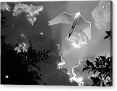 Up Up And Away Bw Acrylic Print