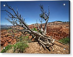 Acrylic Print featuring the photograph Uprooted - Bryce Canyon by Tammy Wetzel
