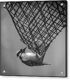 Upside Down Caged But Free Acrylic Print by LeeAnn McLaneGoetz McLaneGoetzStudioLLCcom