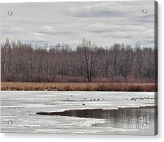 Upstate New York Early Spring Acrylic Print by Judy Via-Wolff
