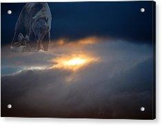Ursa Major  -  Great Bear Acrylic Print by Kevin Bone