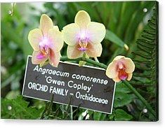 Us Botanic Garden - 121230 Acrylic Print