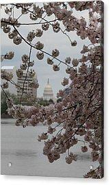 Us Capitol - Cherry Blossoms - Washington Dc - 01133 Acrylic Print by DC Photographer