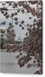 Us Capitol - Cherry Blossoms - Washington Dc - 01134 Acrylic Print by DC Photographer