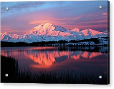 Usa, Alaska, Denali National Park Acrylic Print by Hugh Rose