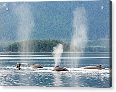 Usa, Alaska, Seymour Canal Acrylic Print by Jaynes Gallery