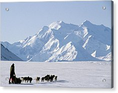 Usa, Alaska, Sled Dogs, Park Ranger Acrylic Print