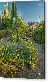 Usa, Arizona, Coronado National Forest Acrylic Print
