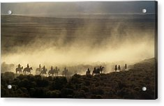 Usa, California, Bishop, Cattle Drive Acrylic Print by Ann Collins