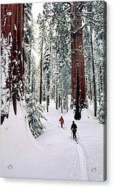 Usa, California, Cross Country Skiing Acrylic Print