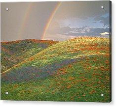Usa, California, Near Gorman Acrylic Print