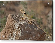 Usa, California, Redding Canyon Acrylic Print