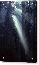 Usa, California, Sun, Smoke, Forest Acrylic Print