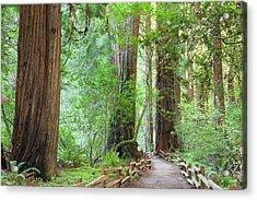 Usa, California Trail Through Muir Acrylic Print by Jaynes Gallery