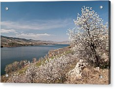 Usa, Co, Larimer Co, Fort Collins Acrylic Print