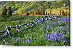 Usa, Colorado Lupines And Split Rail Acrylic Print by Jaynes Gallery