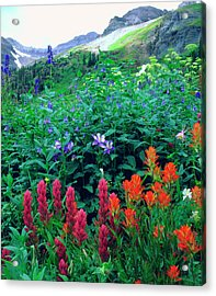 Usa, Colorado, Wildflowers In Yankee Acrylic Print by Jaynes Gallery