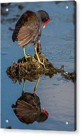 Usa, Florida, Green Cay, Wakodahatchee Acrylic Print by Jaynes Gallery