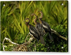 Usa, Florida, Orange County, Gatorland Acrylic Print