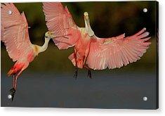 Usa, Florida, Tampa Bay, Alafaya Banks Acrylic Print